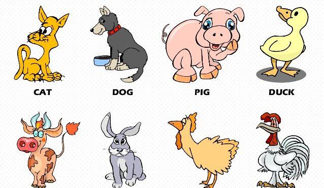 حیوانات در مزرعه