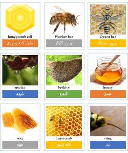 پیکشنری زنبور، کندو و عسل به انگلیسی
